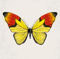 Butterfly posters. A Design&Illustration project by Fabrizio Maulella         - 11.06.2013