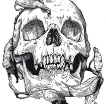Skull. A Illustration, and Fine Art project by Ana Marín - Dec 19 2013 12:00 AM