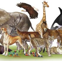 Libros de texto de biología, para bachillerato primaria y secundaria . A Illustration project by Eduardo Rodriguez Marin - 30-03-2015