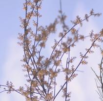 Branches. A Photograph project by Patricia Suárez         - 02.04.2015