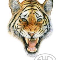 Tigre. A Illustration project by Fernando Garrido Rubio         - 07.02.2016