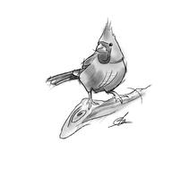 Ilustración - Pájaros. Un proyecto de Diseño, Ilustración, Bellas Artes, Diseño gráfico, Pintura y Arte urbano de Miguel Angel Lallana Figueroa - 24-06-2016