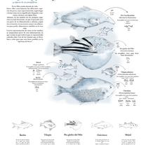 Peces en el Antiguo Egipto. Infografía. Um projeto de Ilustração e Infografia de Alexandra Bast - 13-02-2017